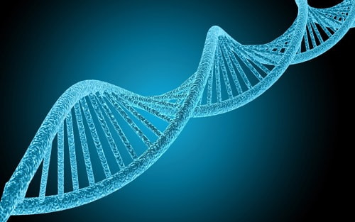 変形性膝関節症に関係する遺伝子