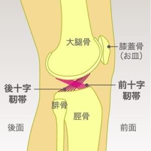 膝を曲げると痛い原因は様々。最善策は早めの受診【医師の話 ...