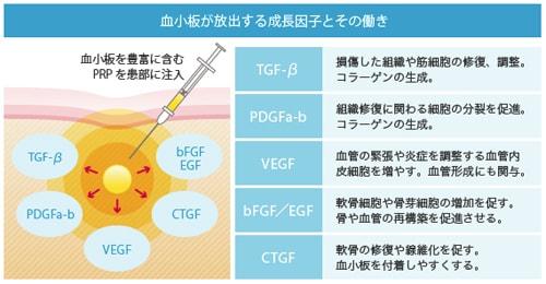 PRP療法で分泌される成長因子