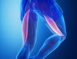 膝が伸びない原因のひとつハムストリング