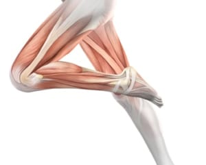 40代の膝の痛みと筋肉