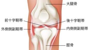 膝の靭帯の種類